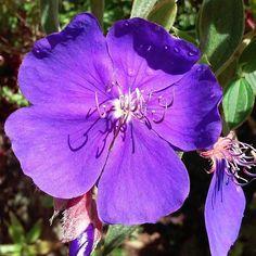 Atiende al consejo, y acepta la corrección; así acabarás siendo sabio. Son muchas las ideas del corazón humano; sólo el consejo del Señor permanece. Prov. 19:20-21 ________________________________ #bynael #boricua #sonofgod #frompuertorico #isladelencanto #boriquén #borinquen #bibleverse #bible #beautiful #loveflowers #flowerstagram #flower #flowers #flores #followjesus #followjesustogether #founa #nature #tropicalnature #tropicalisland #lovephotography #lovegod #lovefollowers #lovenature…