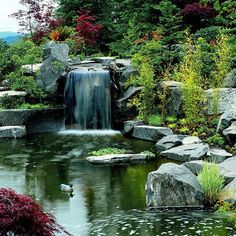 """Garden Tour: The Everything Garden -- I typically find home """"ponds"""" so artificial they are laughable...while the waterfall aspect is still unrealistic, there is overall beauty, beauty between the rocks. SGS - page 7/19"""
