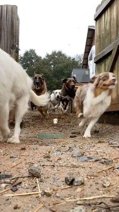 Animal Jokes, Funny Animal Memes, Funny Animal Pictures, Cute Funny Dogs, Cute Funny Animals, Baby Dogs, Pet Dogs, Doggies, Gato Gif