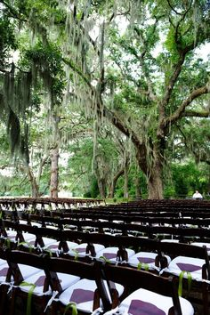 Wedding at Historic Honey Horn Plantation on Hilton Head Island, Under the oak trees
