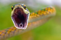 http://richworks.in/2010/06/built-to-kill-40-breathtaking-closeup-photographs-of-animals/