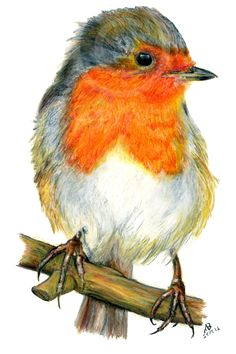 Robin Red Breast, Native British Garden Birds, Watercolour Pencil Drawing - This cute Robin red breasted bird was hand-drawn in September 2016 using watercolour pencils. Inspired by the inquisitive and cheeky robin who quite happily perches very near-by in order to watch me gardening, no doubt ready to nip in and grab a worm or two whilst my back is turned! Little Robin red breasts regularly feature on Christmas cards, snow scenes and grace British gardens everywhere which is why the…