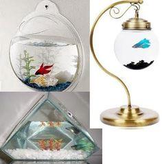 betta peixes ornamentais - Pesquisa Google