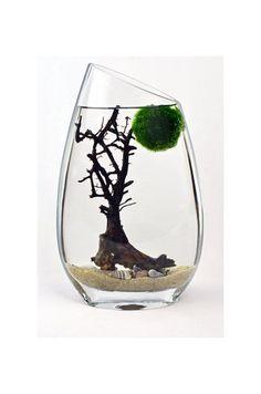 Marimo Terrarium // Japanese Moss Ball Aquarium // by PinkSerissa, $46.00
