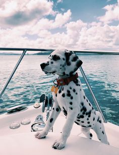 Good Pic dogs and puppies happy Thoughts Carry out you like the dog? Appropriate doggy care as well as training will assu Baby Animals Pictures, Cute Animal Pictures, Animals Images, Dog Pictures, Cute Little Animals, Cute Funny Animals, Funny Dogs, Funny Puppies, Funny Kittens