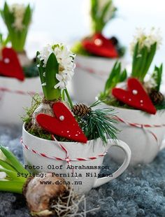 dona blogg: hyacinth bulb in a teacup, surrouned by moss and a 'sprig' of evergreen & red felt heart. Tied with a string of red & white around the cup