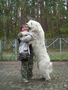 The Caucasian Mountain Dog is one of the largest dog breeds that you can ever find. There are more than 10 names that are used for referring to this dog Huge Dogs, Giant Dogs, I Love Dogs, Huge Dog Breeds, Small Dogs, Funny Dogs, Funny Animals, Cute Animals, Giant Animals