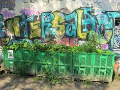 Gemüsekästen vor der Graffitiwand 1