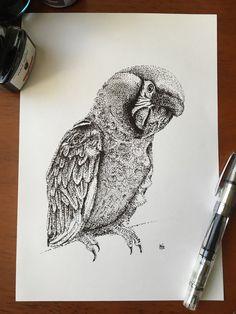 Original Macaw Bird Pointillism Drawing by KCGillies
