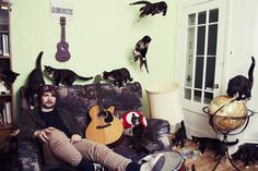 кіт, фото