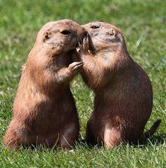 Интересные факты о языке животных http://www.belnovosti.by/domashnie-zhivotnye/53511-interesnye-fakty-o-yazyke-zhivotnykh.html