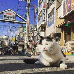 東京下町 谷中銀座