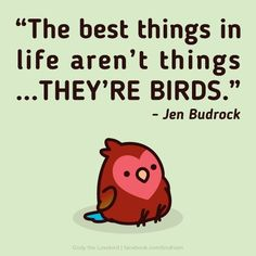 'Cos birds are people too Funny Birds, Cute Birds, Pretty Birds, Beautiful Birds, Parrot Facts, Feathered Dinosaurs, Budgies, Cockatiel, Funny Parrots