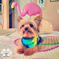 """DOG OF THE DAY  @amateurbigshot Jun.09,2012"