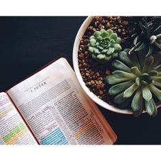 Real Talk: We're basically halfway through 2015 and I am not halfway through my goal of memorizing 1 Peter. I'm scared, intimidated, and undisciplined. I know I want to be deeply rooted in God's Word, but I'm struggling to actually make it happen. Do YOU have any words of wisdom on how to memorize Scripture? I'd love to hear them!