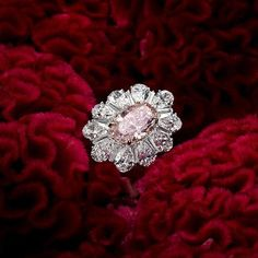 One of our favorite rings! An outstanding fancy pink internally flawless diamond center.  #DavidMorJewelry #ring #jewelry #diamonds #handmade #jewels #flawless #nyc #accessories #pinkdiamond #red #friday #platinum #sparkle #carat #engagement #fancy #pink #luxury #rare #love #nyc #style #precious #highjewelry #beauty #diamond #bling #platinum #instajewelry #luxuryjewelleryevents #jewelryofinstagram