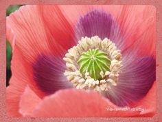 Poppy Flower Printable Download Picture by FlowerPath on Etsy, $3.95