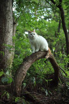アーチ - かご猫 Blog
