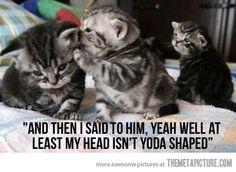 Mean Kitties…