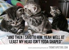 Awww ... kitties aren't supposed to be mean!!