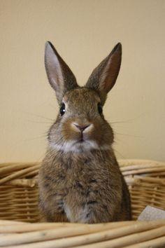 foreve-er:  Animal | via Tumblr on We Heart...