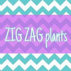 https://www.facebook.com/zigzagplants Instagram @zigzagplants