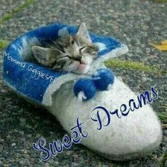 Snug as a bug! Cute Good Night, Good Night Sweet Dreams, Good Night Moon, Good Night Image, Good Morning Good Night, Good Night Friends, Good Night Wishes, Good Night Messages, Good Night Quotes