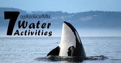 7 Splasherific Water Activities in Victoria. Hop on a ferry in the inner harbour, go whale watching , rent a kayak or sail in Victoria, B.C. #sail #kayak #canoe #ocean #water #beach #whalewatching #exploreVictoria | www.tourismvictoria.com