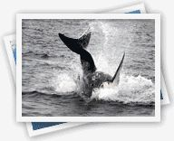 False Bay shark cage diving African Shark Eco-Charters, our Great White Shark season has opened up and we have run around 10 shark cage diving trips Shark Cage, Shark Diving, Great White Shark, Africa Travel, Whale, Trips, Gay, Traveling, African