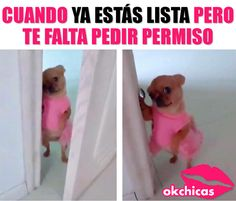 100 Chihuahua Memes That'll Make You Laugh Harder Than You Should Funny Spanish Memes, Funny Dog Memes, Memes Do Momento, Funny Images, Funny Pictures, Success Kid, Tsumtsum, Funny Bunnies, Man Humor