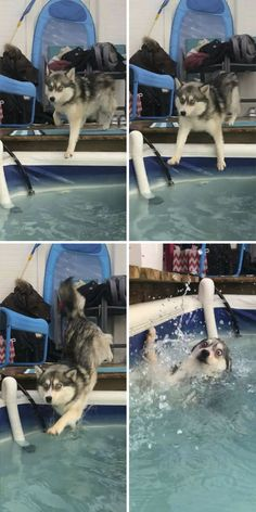 funny cats and dogs & funny cats ; funny cats and dogs ; funny cats can't stop laughing ; funny cats and dogs videos ; funny cats with captions Dog Quotes Funny, Funny Dogs, Funny Animals, Cute Animals, Funny Memes, Funny Husky, Funny Fails, Husky Meme, Funny Puppies
