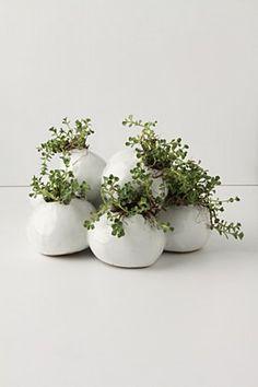 planten in een pot