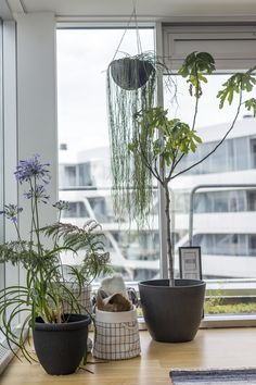 potter planter caroline berg eriksenno