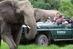 Kariega Game Reserve is home to the Big Five. This malaria-free Eastern Cape Game Reserve in South Africa is also just 15 minutes from the Indian Ocean Game Reserve South Africa, South Africa Safari, African Elephant, African Safari, South Africa Holidays, Safari Holidays, Game Lodge, River Lodge, Cape Town