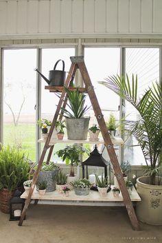 Antique Ladder Shelving | Love Grows Wild