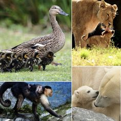 Pictures of Baby Animals and Their Mothers