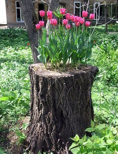 Tree stump planter!