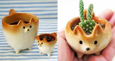 These ceramics look like Shiba Inus and we definitely want one