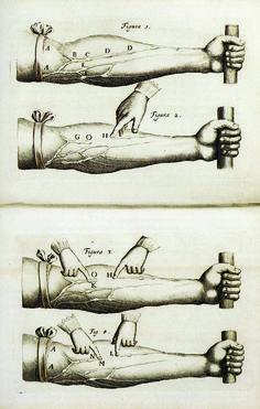 "William Harvey ""De Motu Cordis"" (""On the Motion of the Heart and Blood"") William Harvey, History Museum, Blood, Medical, Heart, Modern, Trendy Tree, Medicine, Med School"