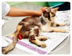 Mimi was living in this condition. PLEASE DON´T LOOK AWAY THIS TIME.  I don't usually post pictures of this kind but feel that it needs to be so we can donate to save this sweet baby!~