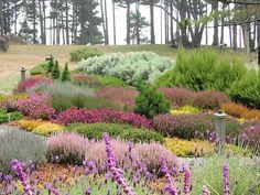 Heather garden - so colorful.