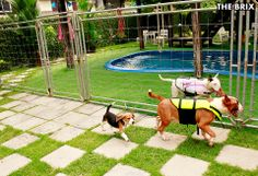 #BullTerrier #Dog #Narong #Shako