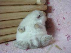 Adorable little bunny sleeps