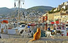 Cat watching the port arrivals in Hydra island, Greece