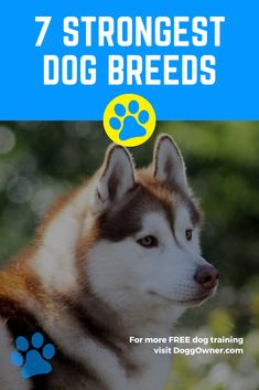If you are looking for the strongest dog breeds, that can protect you or your family, your search ends here. Here are the top 17 strongest dog breeds! Dog Breeds List, Large Dog Breeds, Large Dogs, Puppy Training Classes, Best Dog Training, Puppy Trainer, Choosing A Dog, What Dogs, Dog List