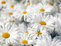 Don't you think Daisy's are the friendliest flowers?