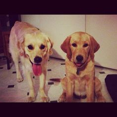 Two beautiful girls. Bindi and Lexie.