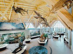 Philip J. Currie Dinosaur Museum - Prehistoric Adventures