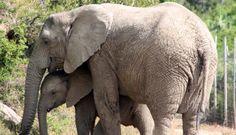 Volunteer Programs, Port Elizabeth, Big 5, Game Reserve, Animals Of The World, Wildlife Photography, Conservation, South Africa, Cape