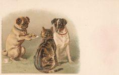 Pug, Dog,Cat  Postcard, unused. Verlag Wenzel & Naumann Leipzig Serie IV Nr.2. Helena Maguire.